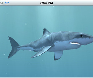 Track Great White Sharks with your iPhone