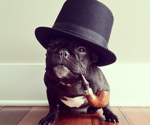 Trotter, The Fashion Forward Dog