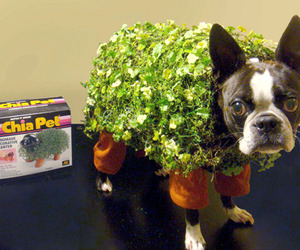 Turn Your Dog into a Chia Pet for Halloween