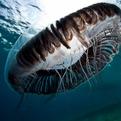 Underwater Life Yiannis Issaris.
