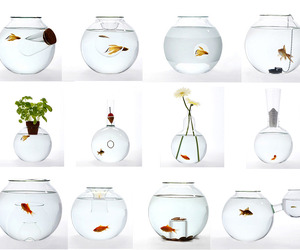 Unusual Blown Glass Fishbowls