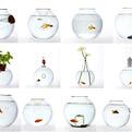 Unusual Blown Glass Fishbowls