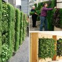 Vertical Gardening: Everything you wanted to know