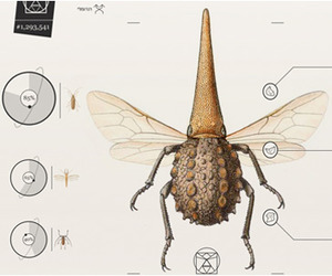 Yael Cohen | What's Your Fav Insect?