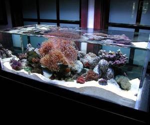 ZeroEdge Aquarium