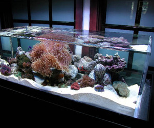 ZeroEdge Aquariums
